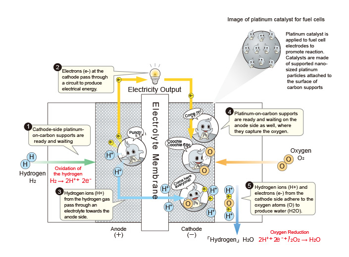 Platinum catalyst is applied to fuel cell electrodes to promote reaction. Electrons (e-) at the cathode pass through a circuit to produce electrical energy.