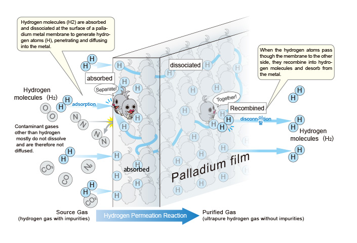 Hydrogen molecules (H2) are absorbed and dissociated at the surface of a palladium metal membrane to generate hydrogen atoms (H), penetrating and diffusing into the metal.